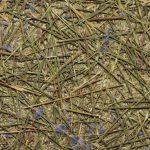 """Akustik-Design Nachhaltig: Gräser und Lavendel als """"akustisches"""" Material"""